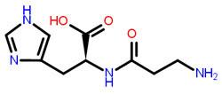 Karnozin otizm l carnosine